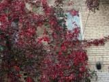 Осень и дома зацепила!