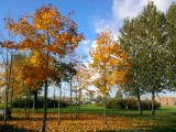 Золотая осень в СПб