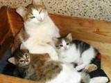Муркина семья