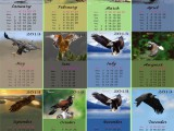 Календарь на 2013 год помесячный - Царь птиц