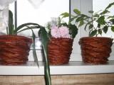цветочные кашпо
