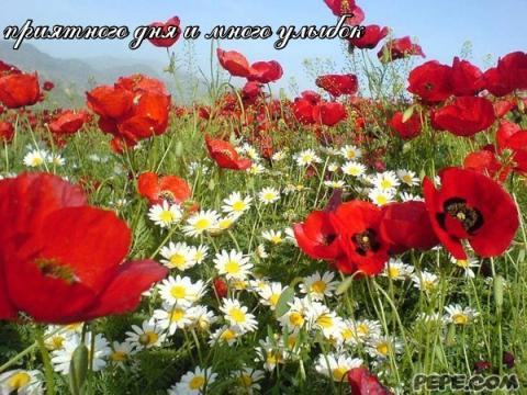 приятного дня и много улыбок