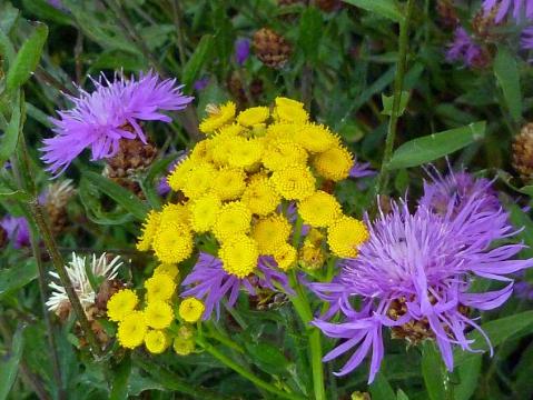 Желтые и фиолетовые 2