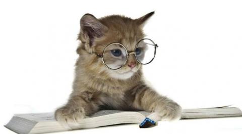 Кот с книгой - Мадина Ганиятулловна Салимова