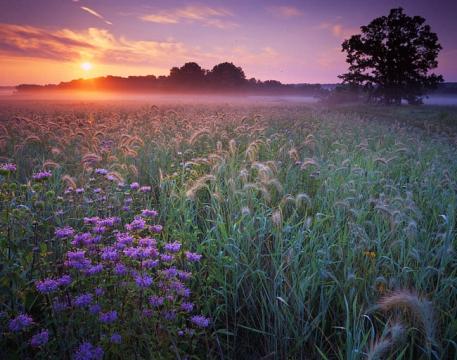 поле цветы