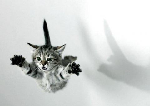 Летающий кот - Светлана Анатольевна Миняева