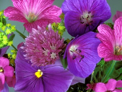 полевые цветы - Мария Ивановна Молчанова