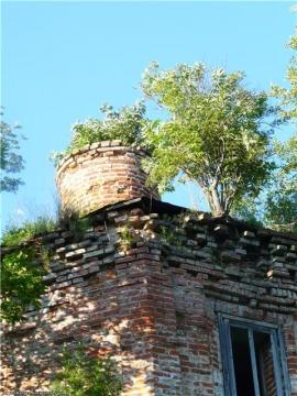 Дерево растет само по себе на крыше - Людмила Александровна Чупина