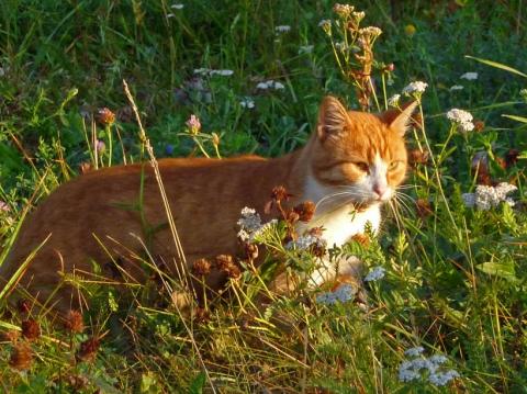 Рыжий утренний кот 1 - Александр Владимирович Серолапкин