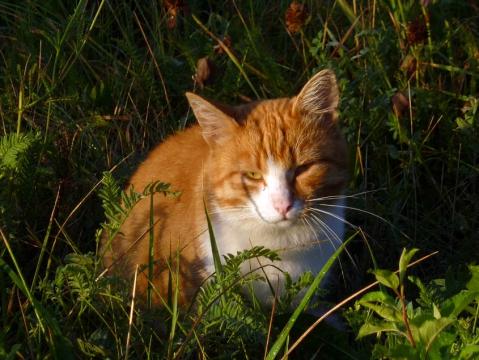 Рыжий утренний кот 3 - Александр Владимирович Серолапкин