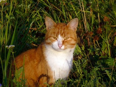 Рыжий утренний кот 4 - Александр Владимирович Серолапкин
