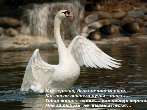 Без названия - Людмила Владимировна Чернова