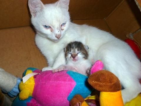 Кошка с котёнком в коробочке - Александр Владимирович Серолапкин