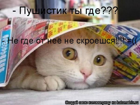 Кот под газеткой