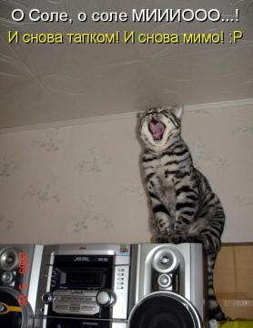 Поющий кот - Марина Анатольевна Аверина