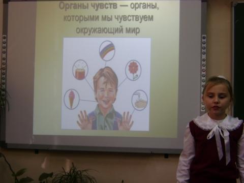 Органы чувств - Ольга Игоревна Баранцева