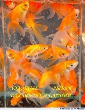 Золотые рыбки для Ваших желаний - Мадина Ганиятулловна Салимова