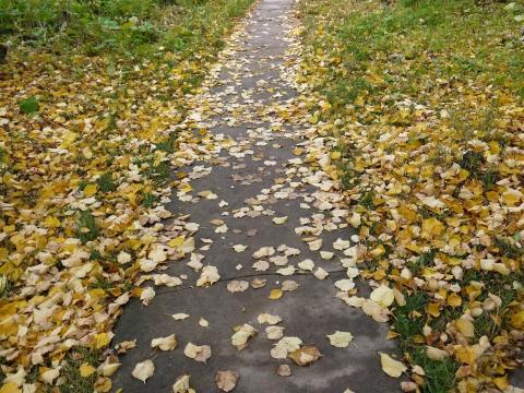 Осень раскрасавица