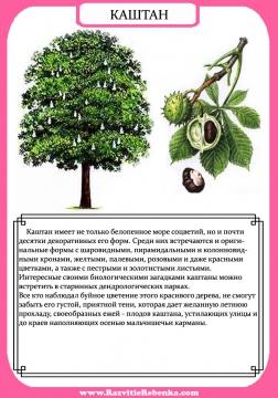каштан - Тамара Нодариевна Саенко