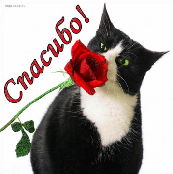 Кошка со спасибом - Александр Владимирович Серолапкин