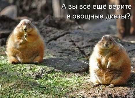 )))) - Наталья Викторовна Размашкина