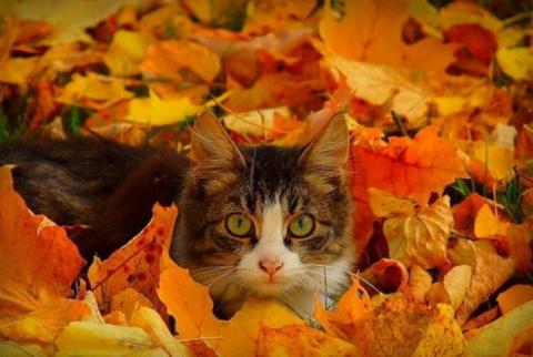 Кошка - наблюдает. - Татьяна Афанасьевна Высоцкая
