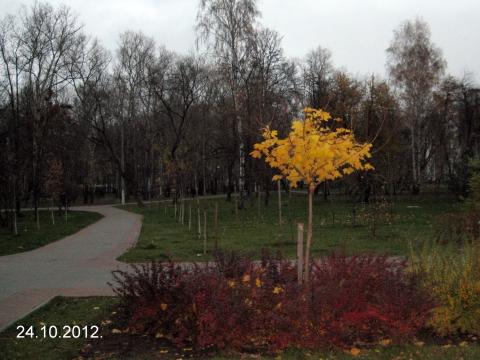 Последний признак осенней красоты... - Осенние забавы.