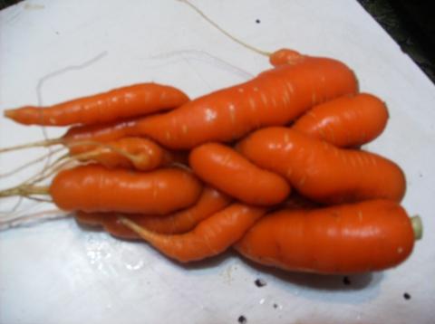 Чудо-юдо морковное! - Татьяна Владимировна Кузнецова