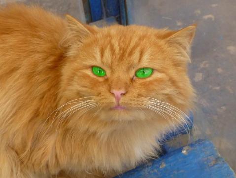 Рыжий кот с зелёными глазами - Александр Владимирович Серолапкин