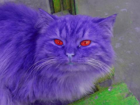 Фиолетовый кот с красными глазами - Александр Владимирович Серолапкин