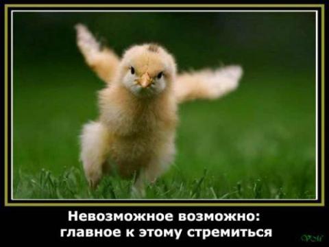 [Изображение: 3443268-cca010e389921602.jpg]