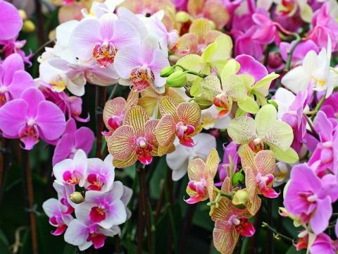 Орхидейная красота