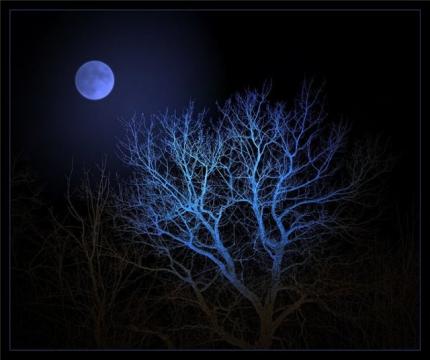 Лунный свет - Ольга Сергеевна Теплоухова
