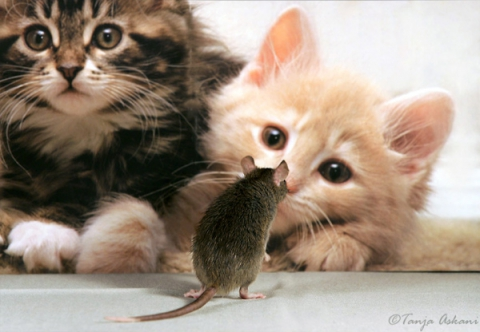 Вась, глянь, мышка, я тоже себе такю же хочу