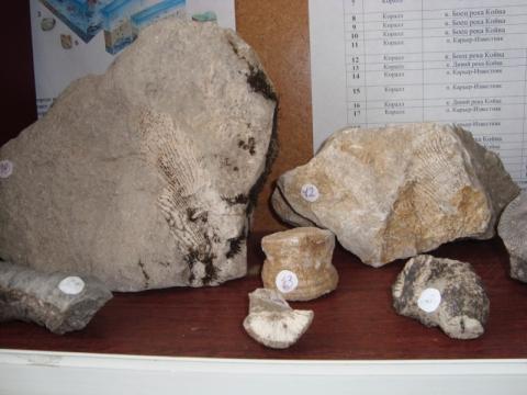 Кораллы - лучший школьный музей