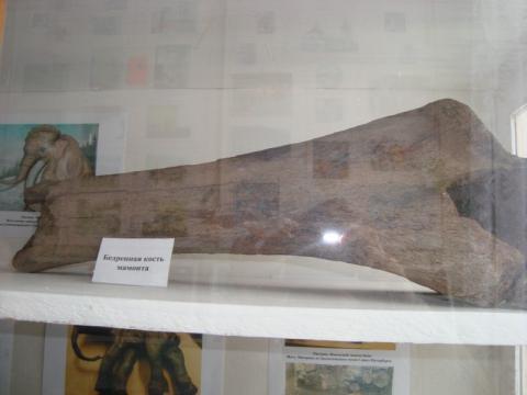 Кости мамонта - лучший школьный музей