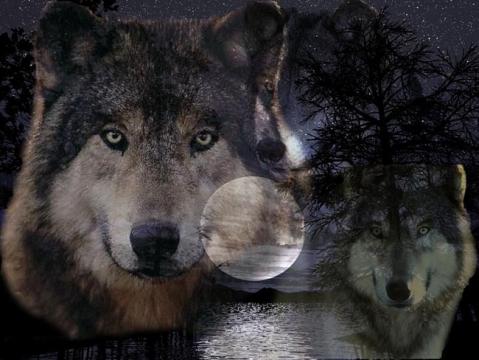 Волк - Petr Ivanovich Kozachenko