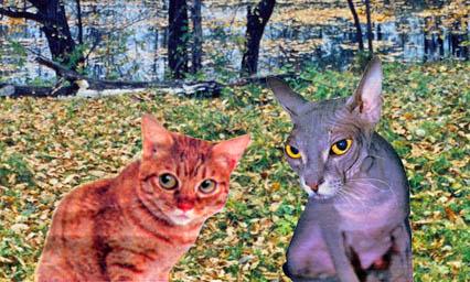 Коты-заговорщики