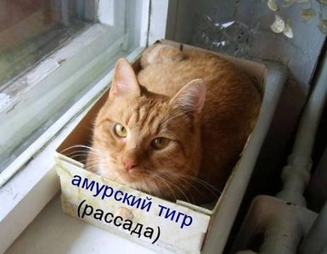Рассада))) - Ирина Валентиновна Ермакова