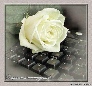 роза на клаве
