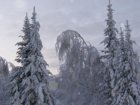 Зимние деревья. - Тамара Николаевна Панфёрова