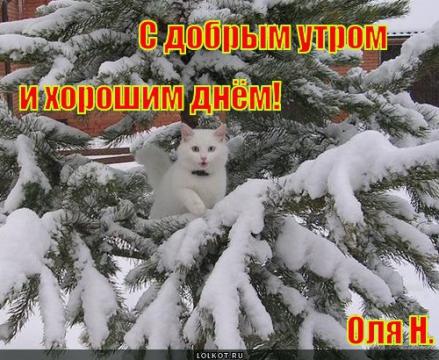 С добрым утром и хорошим днём! - Ольга Владимировна Назарова