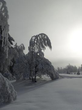 Под тяжестью снега! - Тамара Николаевна Панфёрова