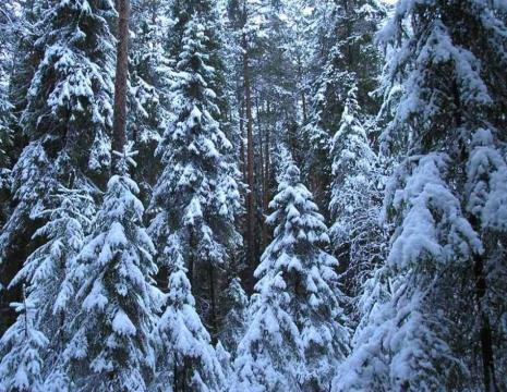 ООПТ Карагайский лес