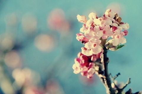 Весна ...в душе