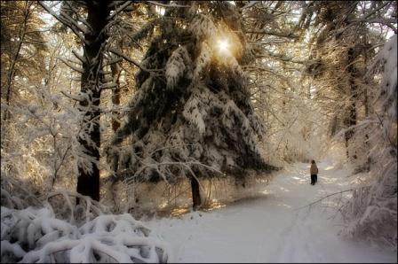 Зима... На лесной дорожке... Уединение.