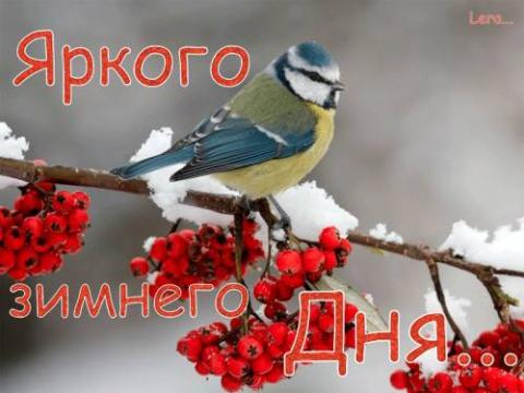 Яркого зимнего дня!