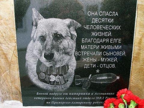 Спасительница - Елга - Надежда Владимировна Черенева