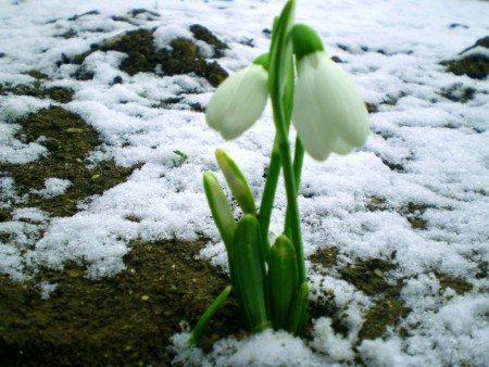 Весна - Ольга Сергеевна Теплоухова