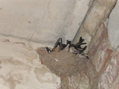 `И вот уже птенцы не помещаются в гнезде` - Ирина Александровна Соловьева